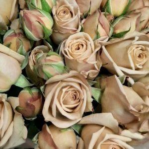 earth spray roses